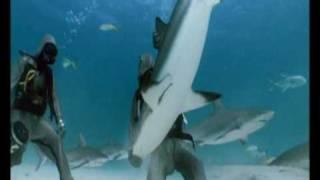 うとうとコテンってか?サメに催眠術をかける方法