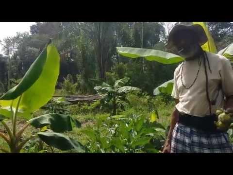 (v)ITAL, biologisch in Suriname/ Organic in Suriname