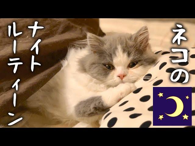 猫のナイトルーティンにこの世の可愛さの全てが詰まってました