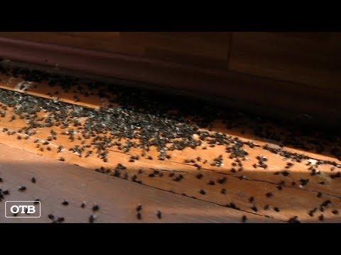 Жители посёлка Лазоревого жалуются на нашествие мух