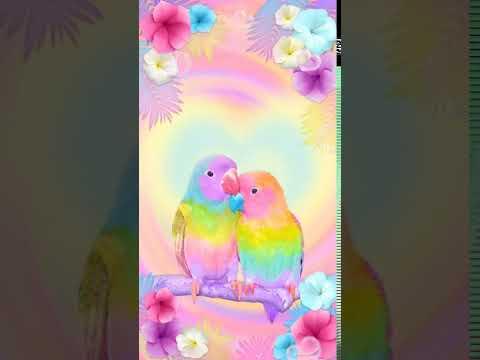Samsung Theme Live Wallpaper Lovebirds Youtube
