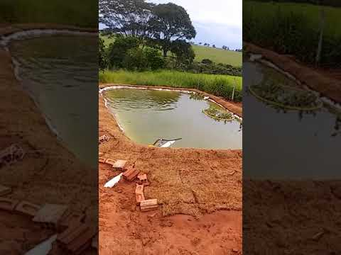 Novo tanque de peixe tá quase pronto