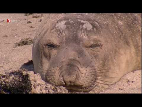 [Doku HD] Baja California - Das andere Kalifornien