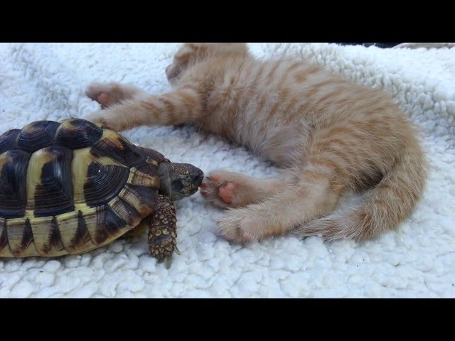 Turtle eats pussy