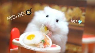 making EGG FRIED RICE for hamstershamster restaurant