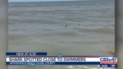 Shark spotted close to swimmers in Jacksonville Beach