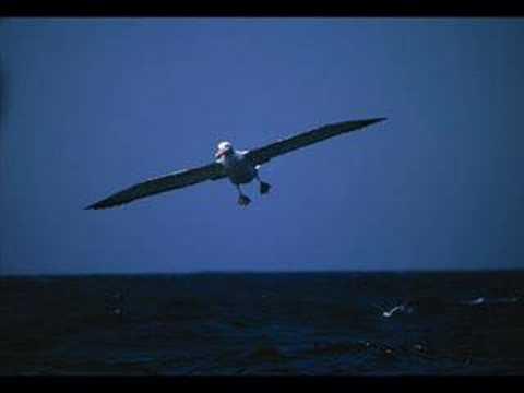 Juha Watt Vainio - Albatrossi
