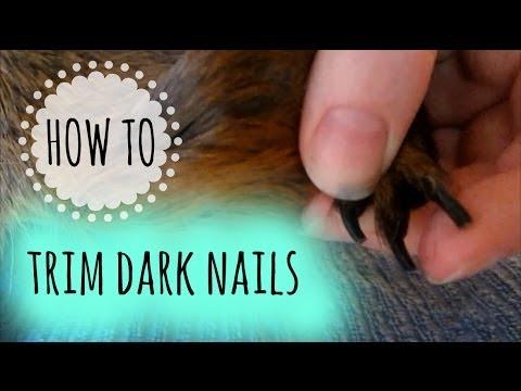 How to Trim Dark Nails on a Guinea Pig