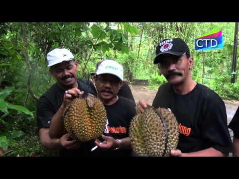 wisata-kuliner-durian-gunan-slogohimo-wonogiri