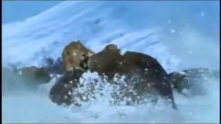 Monsters We Met - Smilodon & Bison