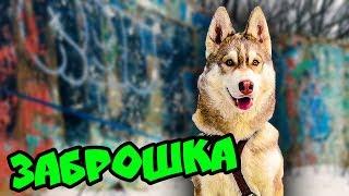 ЗАБРОШКА Я УПАЛ С ПОЛОСЫ ПРЕПЯТСТВИЙ (Хаски Бублик) Говорящая собака