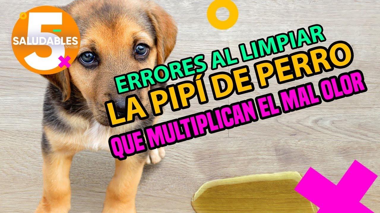 Errores al limpiar la pipí de perro que multiplicara el mal olor.| Salud180