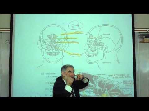 THE HUMAN SKULL; PART 1 by Professor Fink