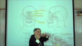 THE HUMAN SKULL; PART 1 by Professor Fink