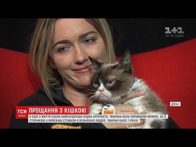 Найсердитіша кішка у світі померла у США