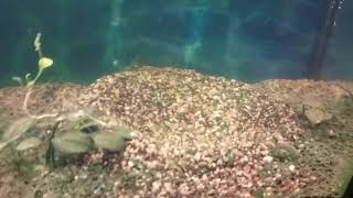 Ядерный взрыв в аквариуме