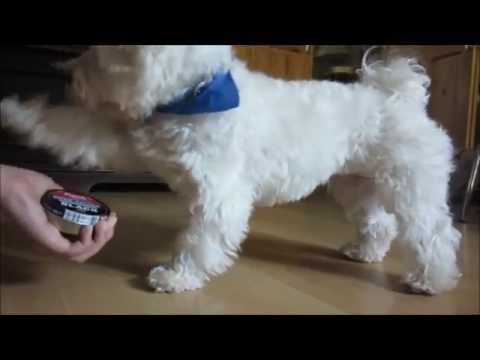 HILARIOUS DOG TRICKS!