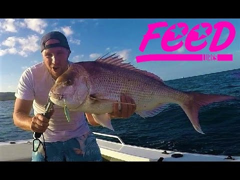 Feed Lures Australia : Feed Flip Micro Jigs in Curtain Reef Brisbane