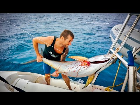 How To Catch BIG FISH While Sailing