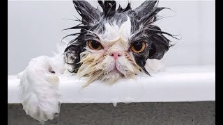 CATS HATE WATER! - Funny Cats vs Water Compilation