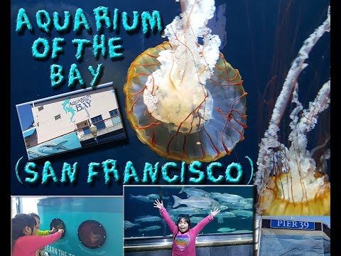 Aquarium of the Bay in Pier 39 at San Francisco CA