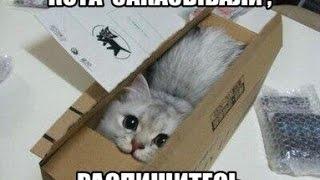 Смешные коты, в коробке# 2 кот под коробкой(Кот еле выбрался из под коробки Подпишись, чтоб не пропустить новое видео----------------ставь ЛАЙК--------------- Пиши..., 2014-11-21T19:13:17.000Z)