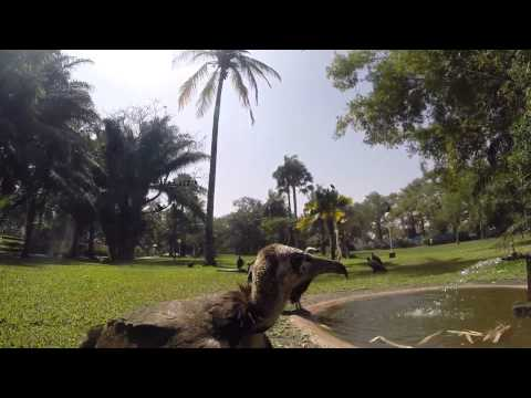 Gambia 2015 - Vultures, Monkeys and Zebras :)