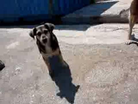 Wilde honden voeren in stad Petra, Lesbos Griekenland. Feed the dogs @ Petra Greece.