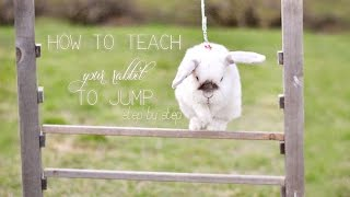 How to teach your rabbit to jump
