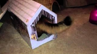 Katze auf der Couch Adventskalender 2013 - 2. Advent