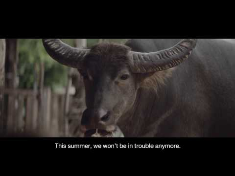 "2017 Tesco Lotus Pracharat ""A letter from a buffalo"" : Branding film"