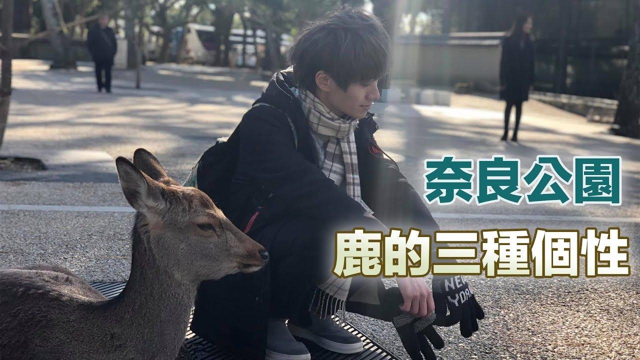 《京都自由行》奈良公園 鹿的三種個性