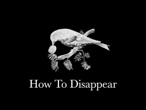 How To Disappear – Lana Del Rey Harp Cover (Waltz Lullaby)