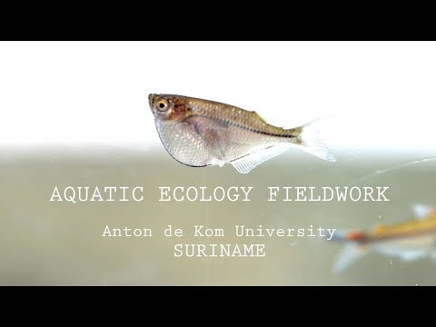 AQUATIC ECOLOGY FIELDWORK IN SURINAME