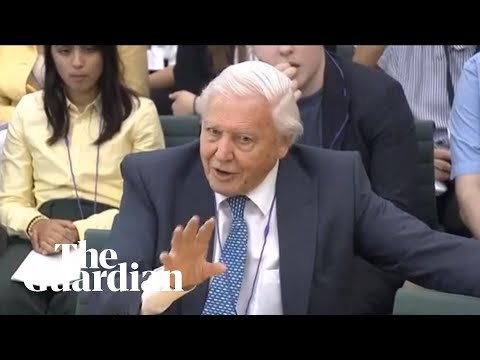 'We cannot be radical enough': David Attenborough urges action on climate emergency