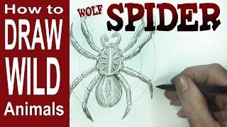 How to Draw a Wolf Spider (beginner)- Spoken Tutorial