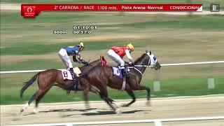 Vidéo de la course PMU PREMIO NAVARINO