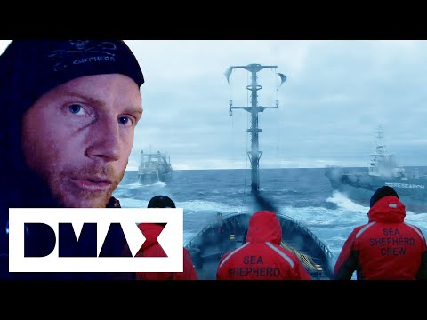 The Sea Shepherds Crash Into A Japanese Whaler Harpoon Ship | Whale Wars