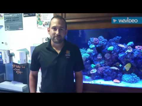 Ed's Fish Tank Extreme Local Reef store Saltwater Solutions