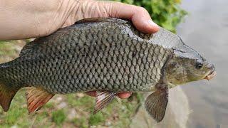 Рыбалка на карпа в начале лета Fishing beginning summer 2020