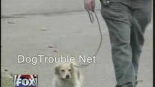 Dogtrouble.net's Jason On Fox News Dog Behavior Training