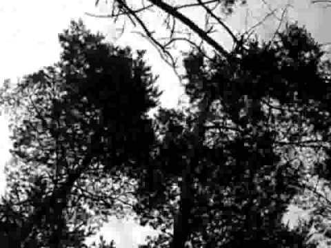 DEAD CURTIS-AllTheseThingsIForgotToSay