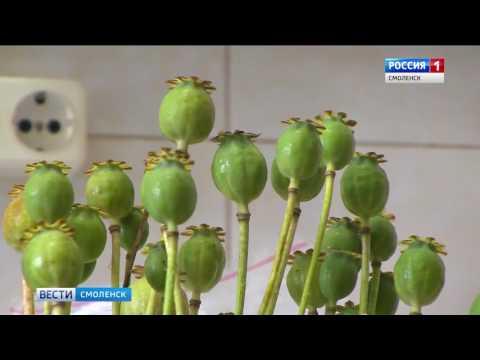 Вопрос: Как посадить семена мака?