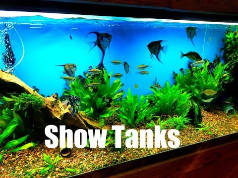 Tour Of Show Tanks At Local Fish Shop, Tropical World Pets St Louis MO