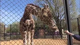 ZOO Moscow / Московский зоопарк / Куда пойти с ребенком Майские 2017