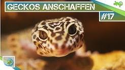 Leopardgeckos anschaffen? Tipps und Tricks (Teil 1)|#17| GeckoTagebuch