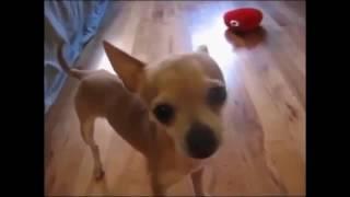 Самые смешные приколы с животными Топ 2016 funny videos. Кошки, собаки, попугаи