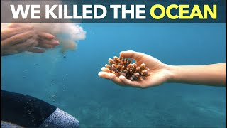 We Killed The Ocean