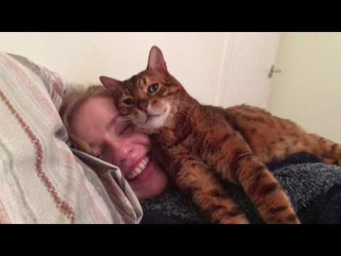 Your face pleases me human! Tonto the bengal cat approves of the girlfriend :)