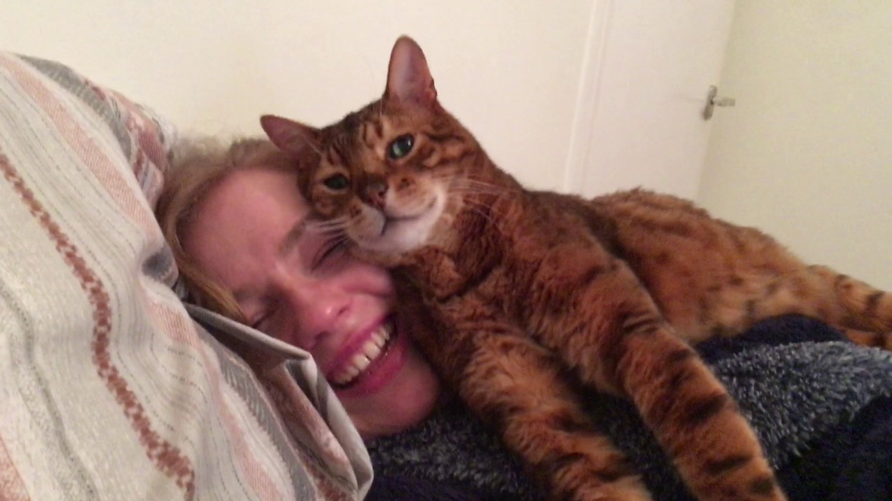 Your face pleases me human Tonto the bengal cat approves of the